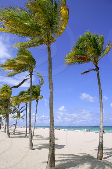 Fort Lauderdale Florida tropical beach with palm trees over blue sky photo