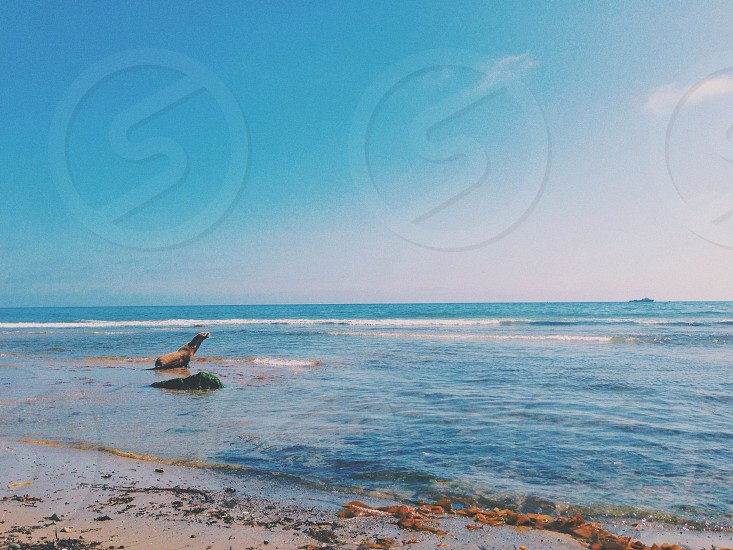 seal on seashore photo
