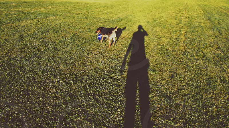 black and tan dog on green grassy field photo