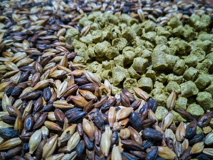 malt and barley for craft beer manufacturing on the table photo