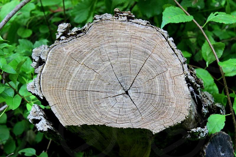 Wood Trunk photo