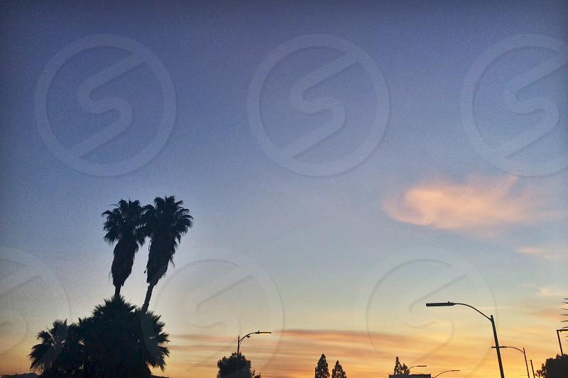 Good Morning California I love you. Sunny beautiful palm tree stricken land. photo