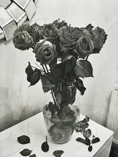 grayscale photo of rose in clear glass vase photo