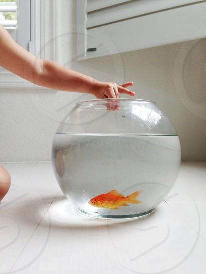 round glass fishbowl photo