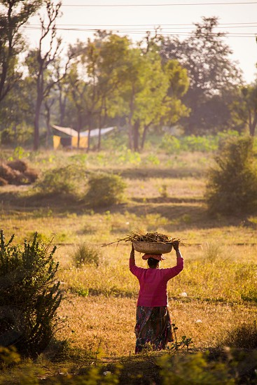 A woman walking through a field carrying a basket of sticks in the village of Karjisan India. photo