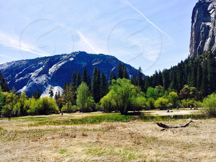 pine trees under the mountain photo