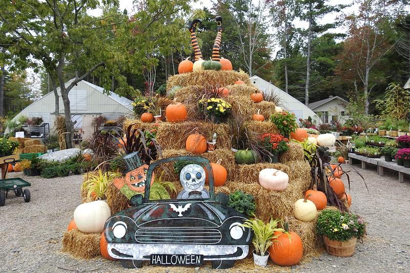 Autumn Decorations          photo