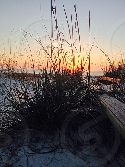 sunrise in the dunes photo