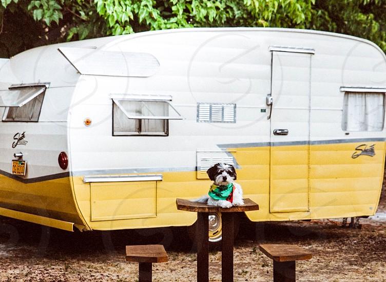 Dog happy pet bandana rv trailer play photo