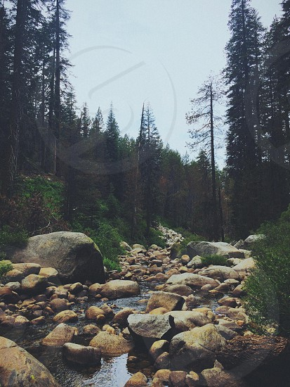 pine trees next to a creek with rocks photo