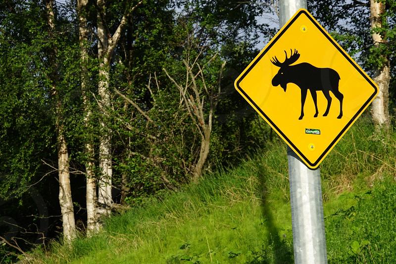 Kincaid Park - Anchorage Alaska photo