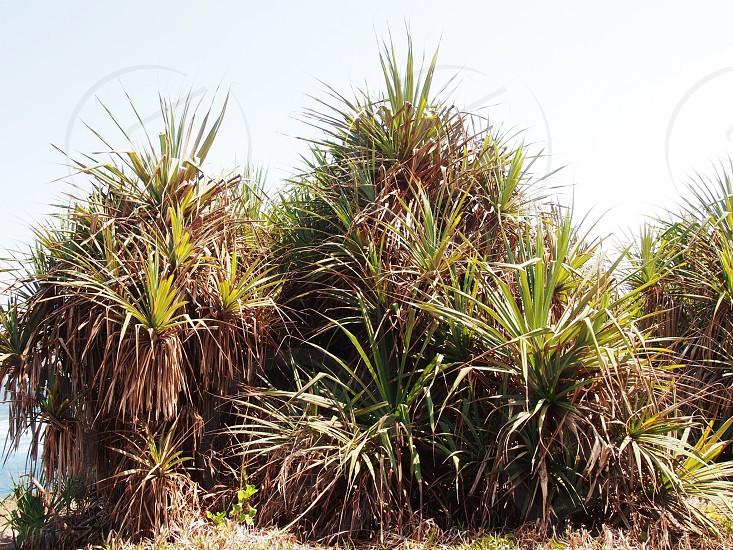 Palms on Nusa Lembongan photo