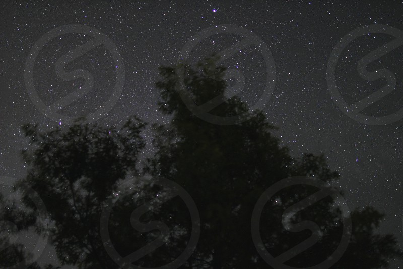Star filled sky behind a large pine tree in the summer time night. photo