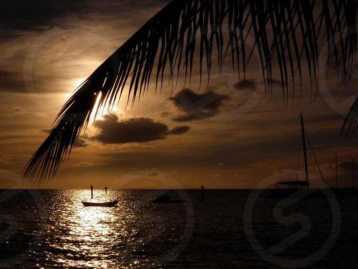 Hawaii sunset sailboat palm treeoceanwater photo