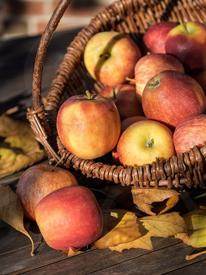 apple apples autumn basket brown collect colorful fall fruit fruits garden green harvest healthy juicy leaf leaves nature october orchard pick picking red ripe season sun sunny sweet table warm colors wicker basket wood wooden photo