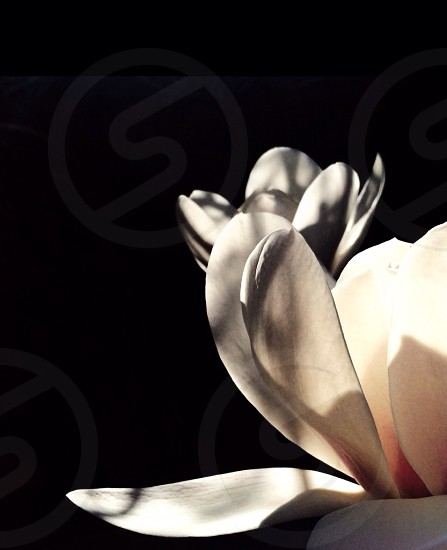 white flower petal photo