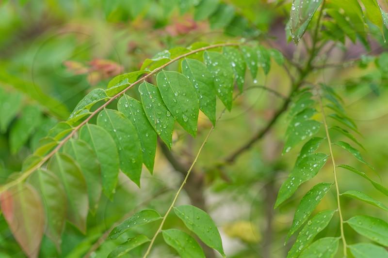 Raindrops on green leave. Freshness concept. photo