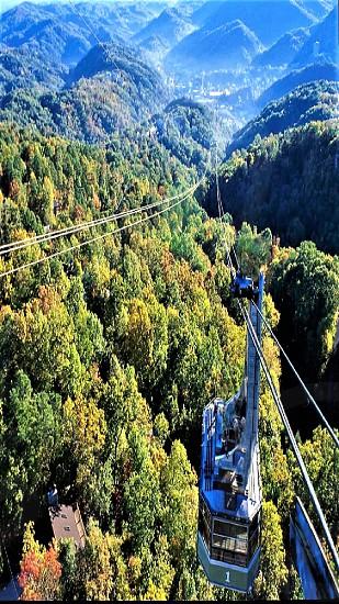 Treetop Aerial Ride photo