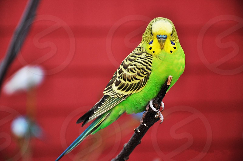 birdie photo