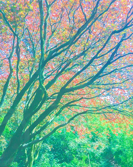 Picture I took of a Cherry tree.... Rich Colors photo