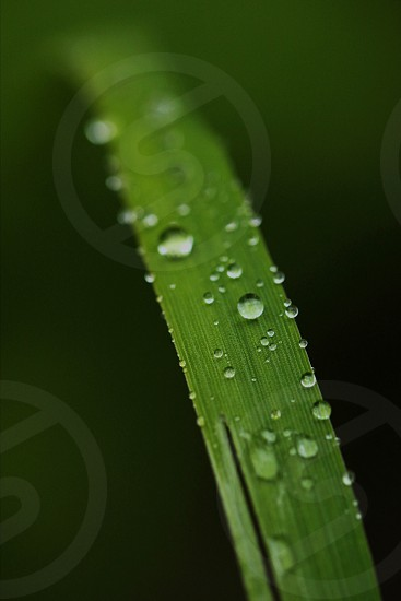 dew covered grass photo
