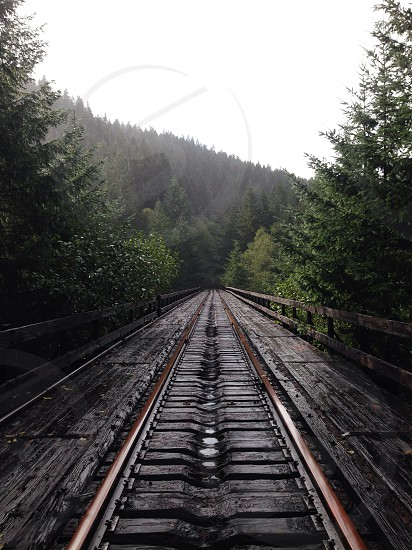 Old railroad trestle nature outdoors distance trees forest  photo