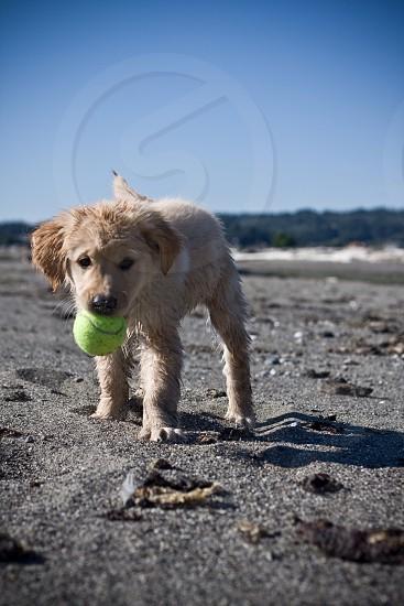 Beach fun! photo