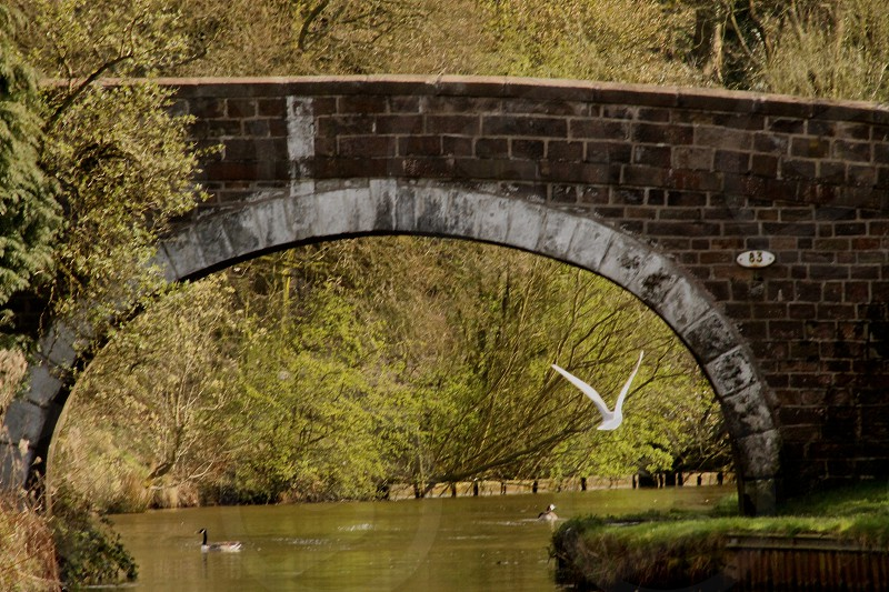 Flight Path...canal bridge  bird in flight wings outstretched photo