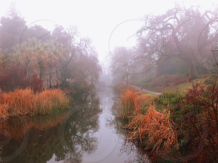 river going through misty treed area photo