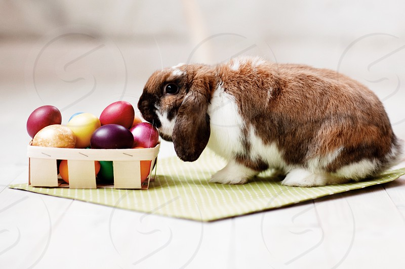 Easter egg rabbit Easter Bunny Easter eggs Easter decoration spring spring time photo