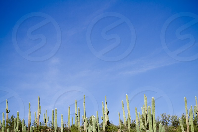 green cactus fields photo