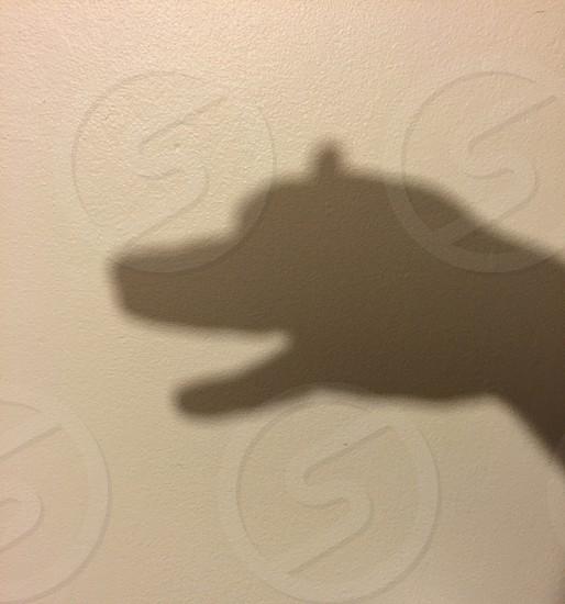hand sign dog shadow photo