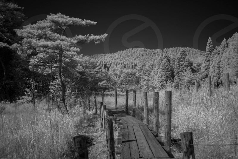 grayscale photography of a wooden dock in the forest photo