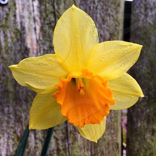 Simple happy flower ! 🌾 photo