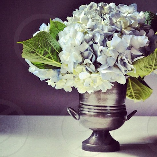 Hydrangea Hydrangea Flower Flower Blue Fresh Spring Summer Flower Arrangement photo