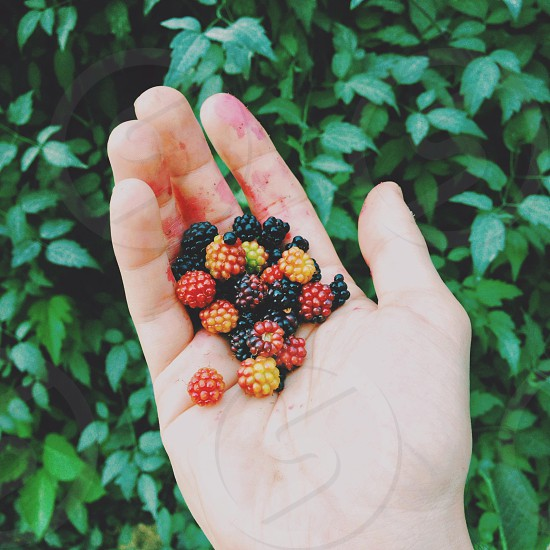 ripe and unripe wild berries photo