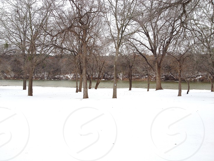 leafless trees at snow covered fields under white skies during daytime photo
