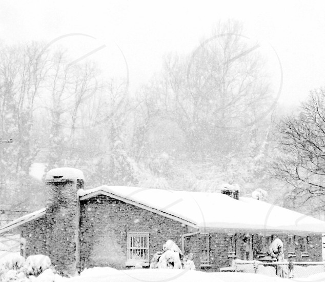 House and trees in a snowstorm photo