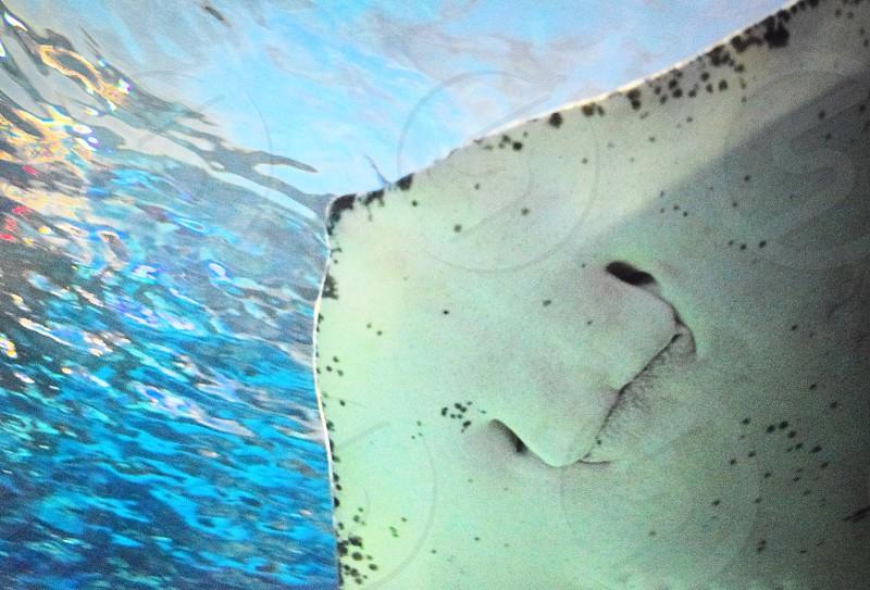 Toronto Ontario Canada ripleys aquarium fish exotic sting ray smile photo