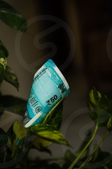 Indian Currency notes of value of Rupees Fifty on money plant photo