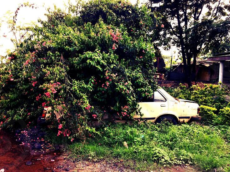 Nature vs car photo