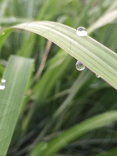 朝露(morning dew) photo