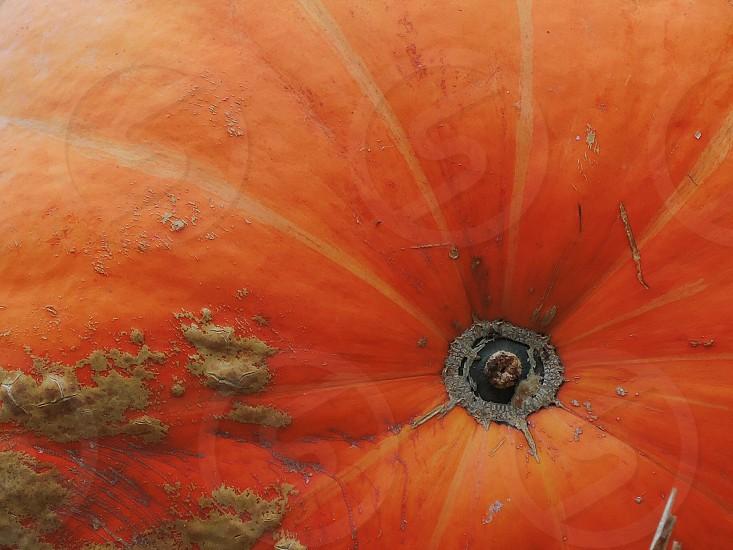 orange round fruit photo