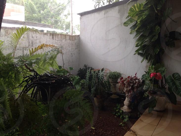cactus plant on garden photo