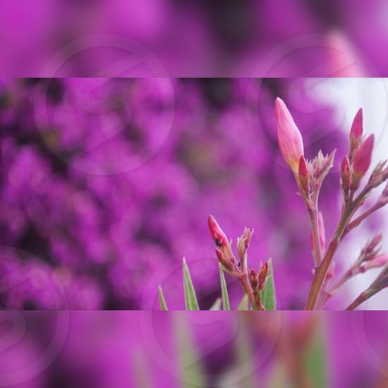 Flower ultra violet photo