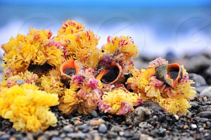 yellow flower on ground photo