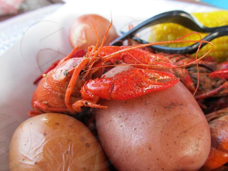 Crawfish on top of boiled potato photo