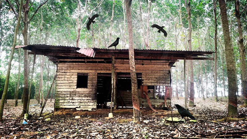 4 crow near empty wooden cabin in center of tall trees photo