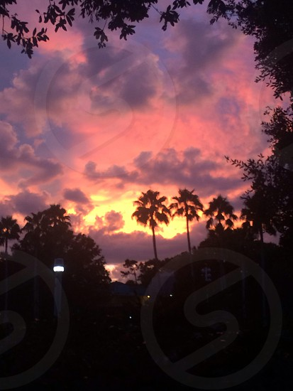 sunset over the palm trees.  photo