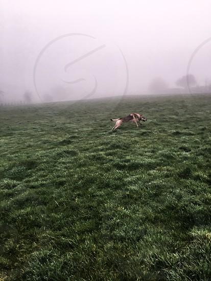 Dog on a foggy morning photo